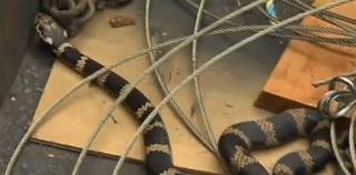 9-19 snake.jpg