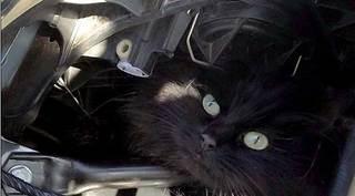 cat 2weeks (1).jpg