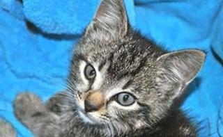 cat pp1.jpg