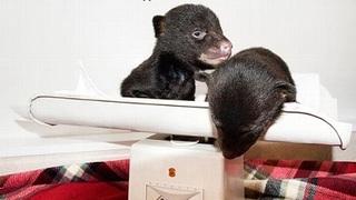 cubs (3).jpg