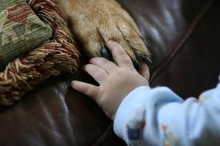 dog baby2.jpg