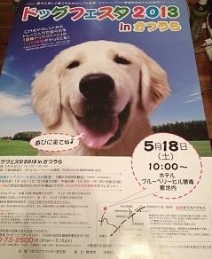 dogfesta - コピー.jpg