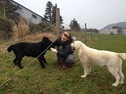 korea farm (7).JPG