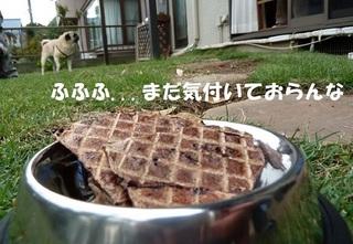 lamb puff1.JPG