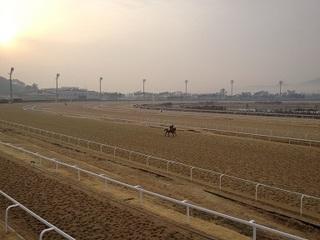 pusan horse (3).JPG