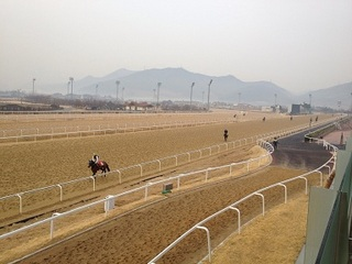 pusan horse (4).JPG