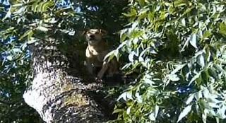 tree dog 2.jpg